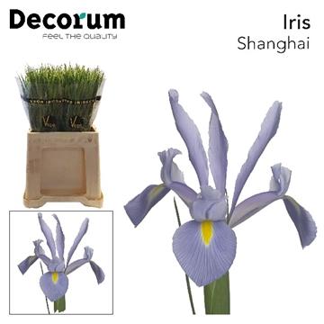 IRIS SHANGHAI