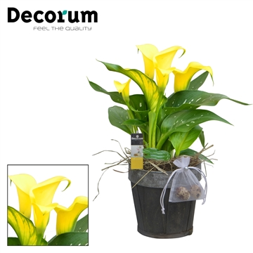 Zantedeschia Hout Rond Decorated HL16688 [YELLOW]