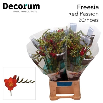 Fr en Red passion Decorum 20/hoes