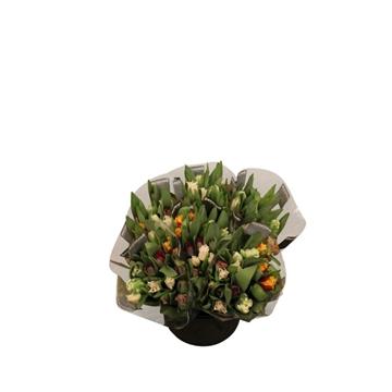 Tulpen verschiedene Farben pro Bund