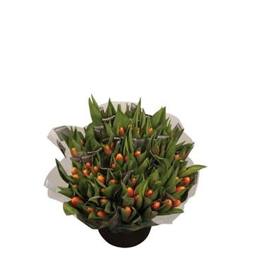 Tulpe einzelblütig