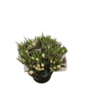 Tulipa gefranst