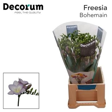 Fr en Bohemian Decorum