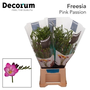 Fr en Pink passion Decorum