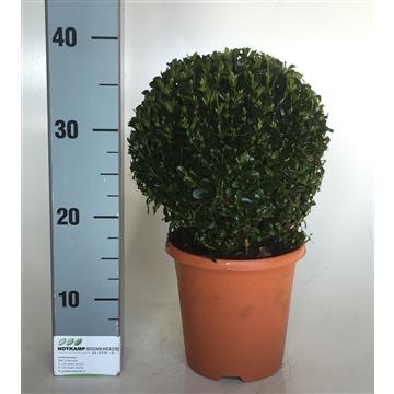 Bol 18-20 cm terracotta pot