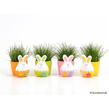 Eleocharis in Easter caramic