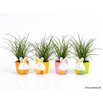 Carex in Easter ceramic