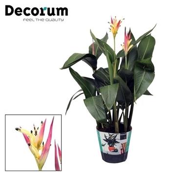 Decorum Premium Heliconia 'Hawai'