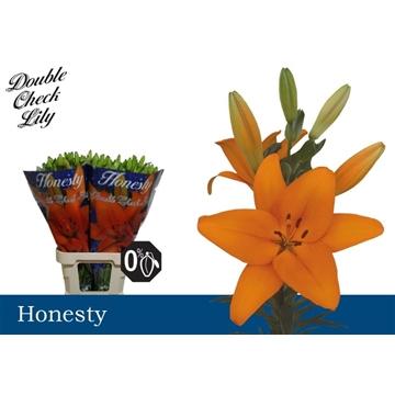 LA Honesty 4+