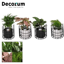 Keen on Green mix 7 cm in pot Dani (Decorum)