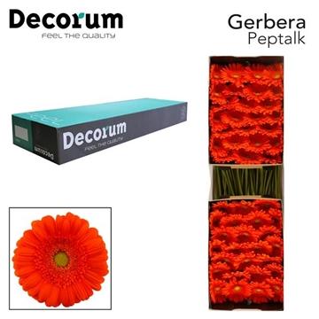 GE GR Peptalk Decorum