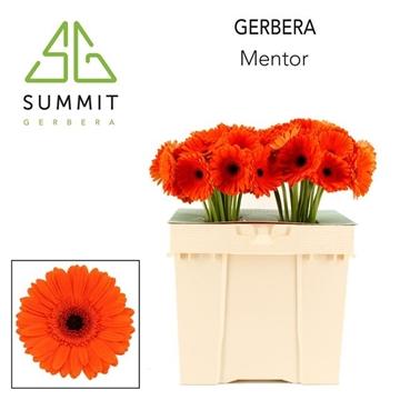 GE GR MENTOR 864