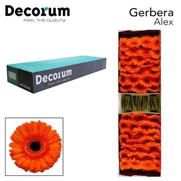 GE GR ALEX Decorum