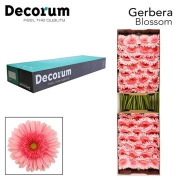 GE GR Blossom Decorum