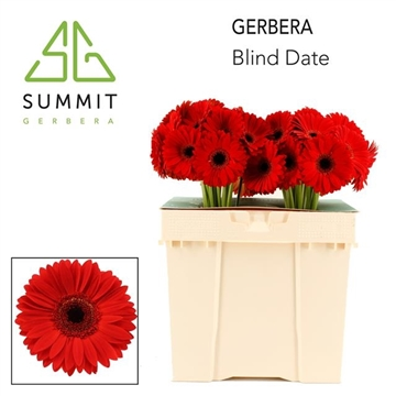 GE GR Blind date Decorum