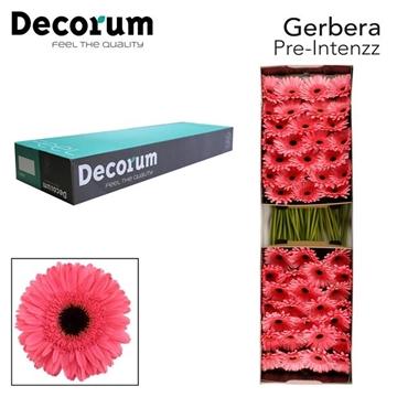 GE GR Pre Intenzz Decorum