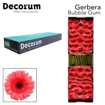 GE GR Bubble gum Decorum