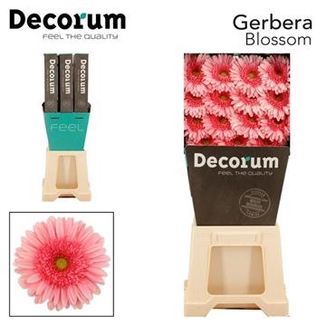 GE GR Blossom DiaDecorum