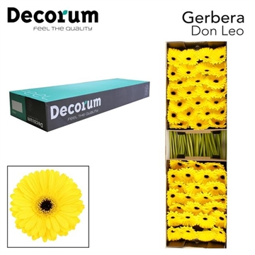 GE GR Don Leo Decorum