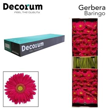 GE GR Baringo Decorum