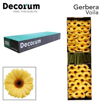 GE GR Voila Decorum