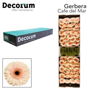 GE GR Cafe del mar Decorum