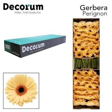 GE GR Perignon Decorum