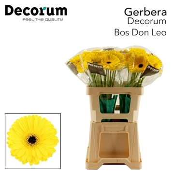 GE GR Don Leo Bos