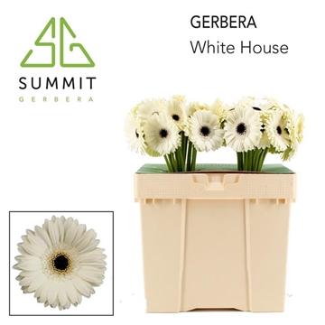 GE GR White House Decorum