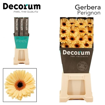 GE GR Perignon DiaDecorum