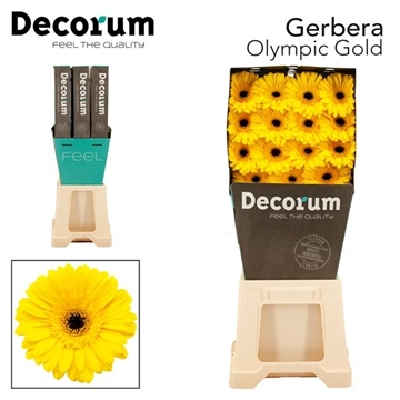 GE GR Olympic Gold DiaDecorum