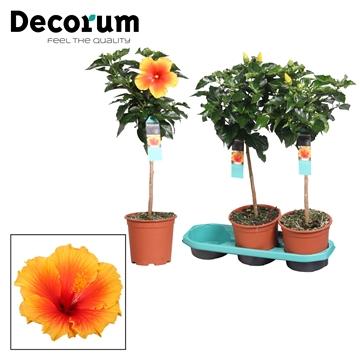 Hibiscus op stam - 19 cm - Salsa (orange/red) - Decorum