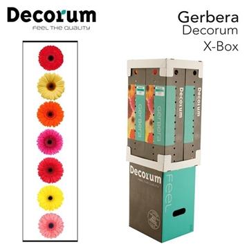 X-Box  fc 848