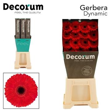 GE GR Dynamic DiaDecorum