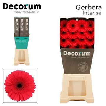 GE GR Intense DiaDecorum