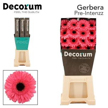 GE GR Pre Intenzz DiaDecorum
