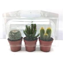 Artikel #415010 (278: Trio cactus in blister)