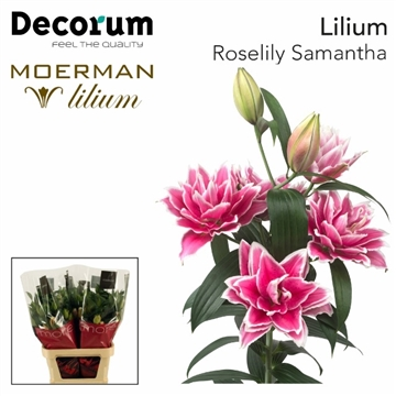 LI OR DU RL SAMANTHA Decorum