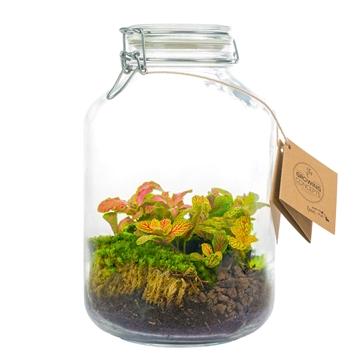 Ecosystem Large Jar - Fittonia's