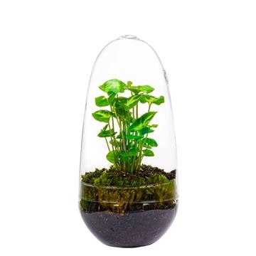 Ecosystem EGG Medium - Pixie Green
