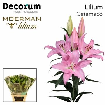 LI OR CATEMACO Decorum