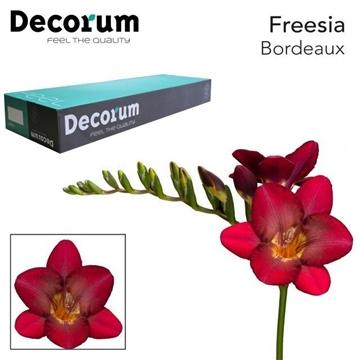 Fr en Bordeaux Decorum