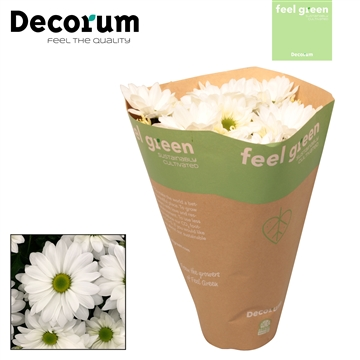 Chrysant Chrysanne® 'Margarita White' Feel Green