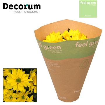 Chrysant Chrysanne® 'Margarita Yellow' Feel Green
