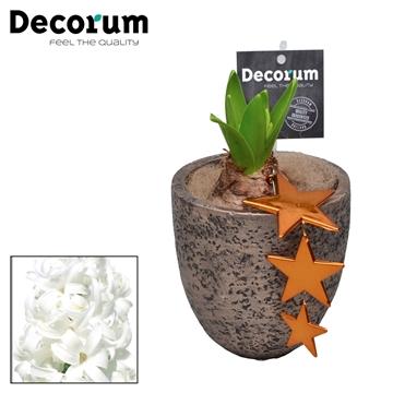 Hyacint Lucy HL18399WP [COFFEE & CHAMPAGNE]
