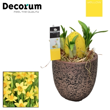 Narcis Lucy HL18395 [YELLOW]
