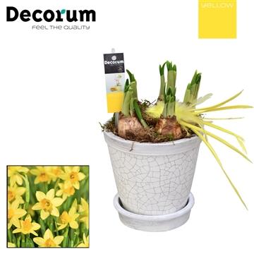 Narcis Crackle Pot Maxi  HL18215 [YELLOW]