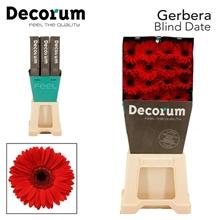 GE GR Blind date DiaDecorum