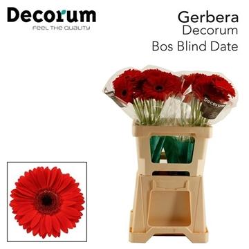 GE GR Blinddate Bos