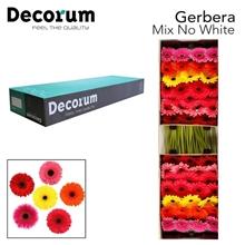 GE GR Mix No White Decorum